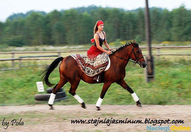 Stajnia Jasminum Maria Bronowska