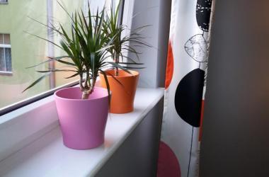 Apartamenty Sedinum - Colors