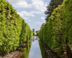 Oliwa Garden